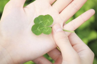 Four-leaf clover in Palm